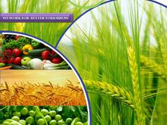 Fabricante y proveedor de pesticidas a nivel mundial