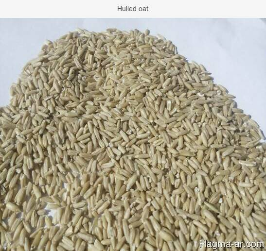 Hulled oat