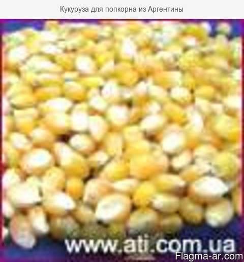 Кукуруза для попкорна из Аргентины