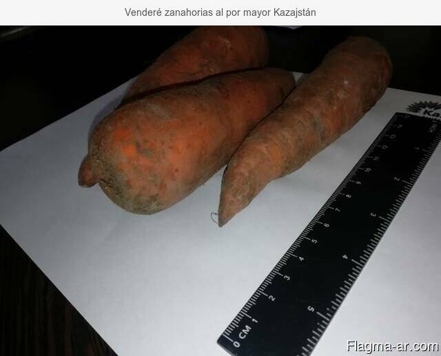 Venderé zanahorias al por mayor Kazajstán